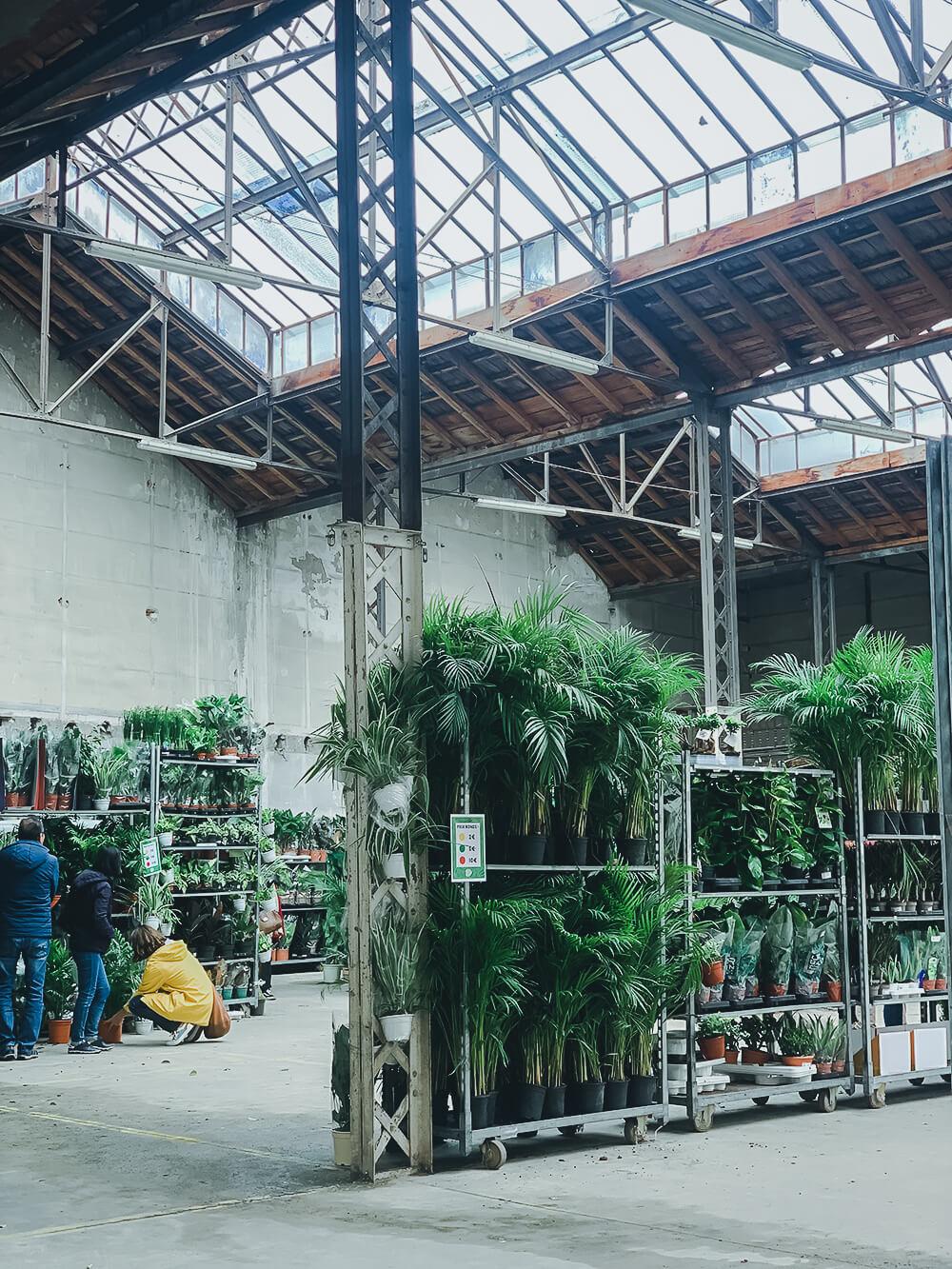 vente plantes Toulouse