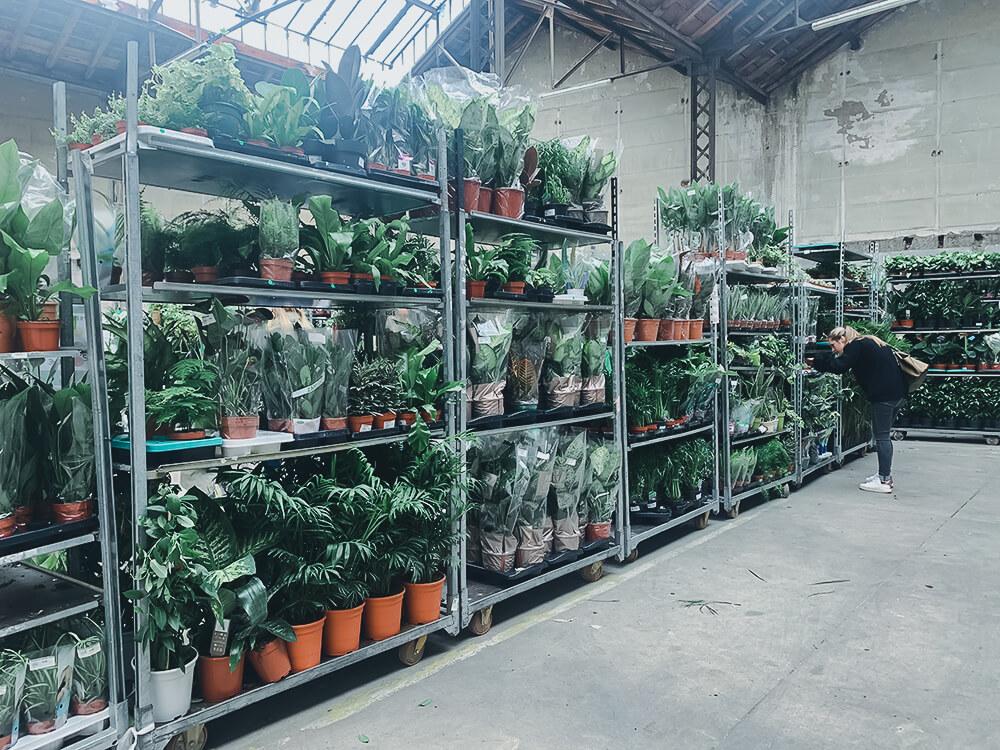 Un bel étal de plantes dans un hangar au cœur de Toulouse