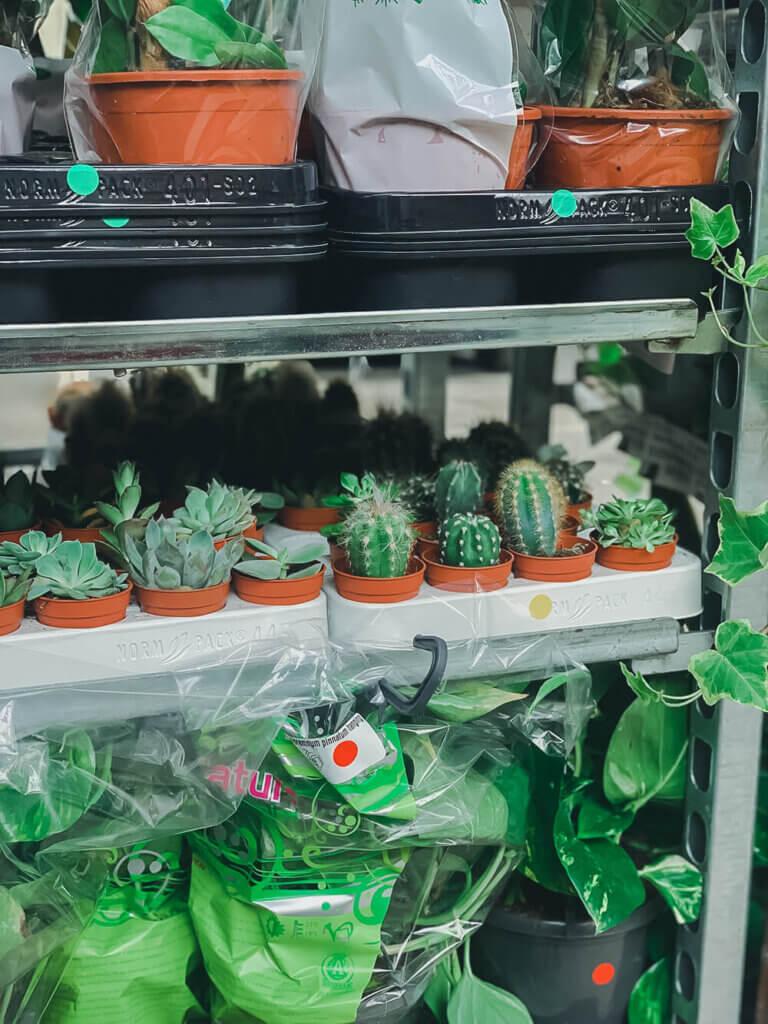 Plantes pour tous, la nature accessible