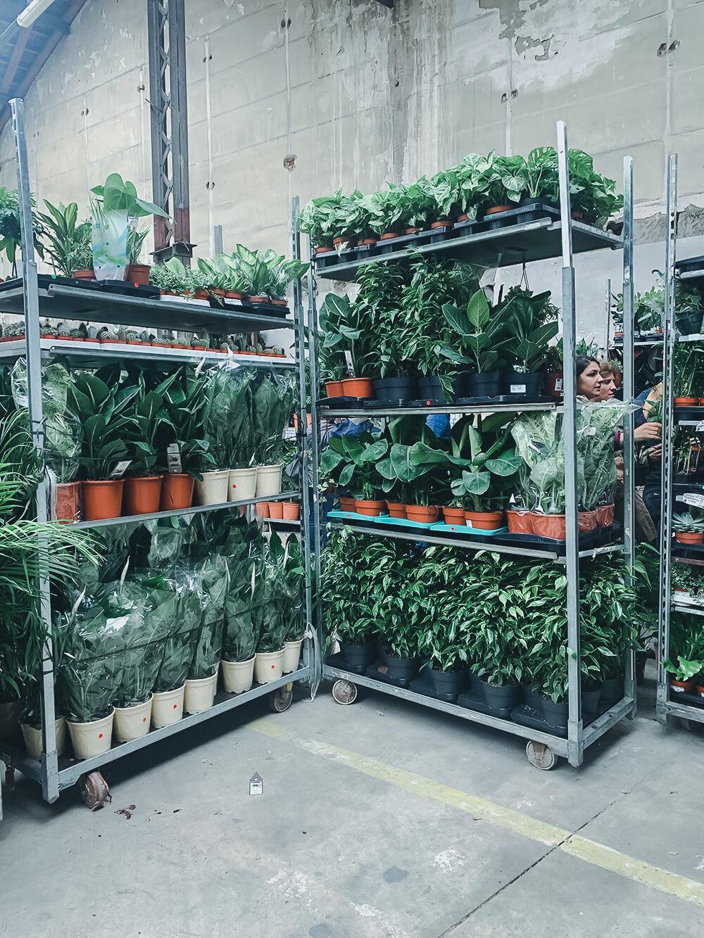 grande vente de plantes
