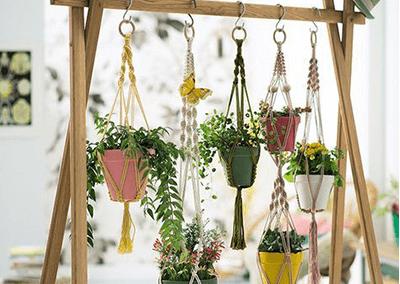 plantes suspendues boutique